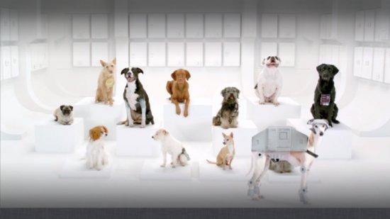 nouvelle pub volkswagen star wars avec des chiens. Black Bedroom Furniture Sets. Home Design Ideas